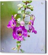 Angel Face Flower - Summer Snapdragon Acrylic Print