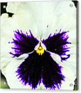 Angel In The Flower Acrylic Print