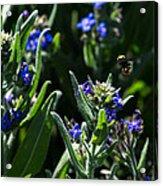 Angel Island Bee Acrylic Print