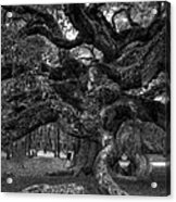 Angel Oak Tree 2 Acrylic Print