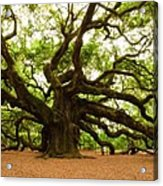 Angel Oak Tree 2009 Acrylic Print by Louis Dallara