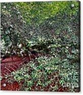 Angel Oak Tree 3 Acrylic Print