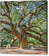 Angel Oak Tree In Charleston Sc Acrylic Print