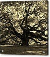Angel Oak Tree Sepia Acrylic Print