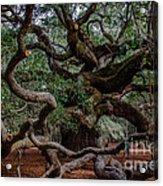Angel Oak Tree Treasure Acrylic Print