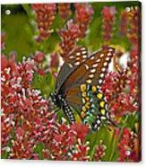 Angel Of The Wildflowers Acrylic Print