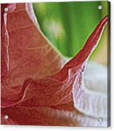 Angel Wing Acrylic Print