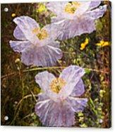 Angels' Wings Acrylic Print