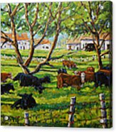 Angus Cows Under The Cool Shade By Prankearts Acrylic Print