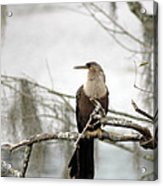 Anhinga On A Misty Morning Acrylic Print