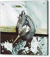 Anhinga Or Snakebird Acrylic Print