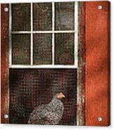 Animal - Bird - Chicken In A Window Acrylic Print