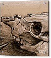 Animal Bones Acrylic Print