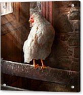 Animal - Chicken - Lost In Thought Acrylic Print