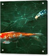 Animal - Fish - Koi - Another Fish Story Acrylic Print