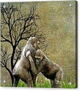 Animal - Gorillas - Isn't Love Grand Acrylic Print