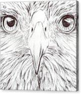 Animal Kingdom Series - Bird Of Prey Acrylic Print