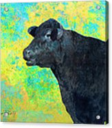 Animals Cow Black Angus  Acrylic Print