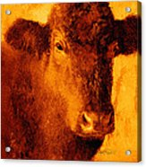 animals- cows- Brown Cow Acrylic Print by Ann Powell