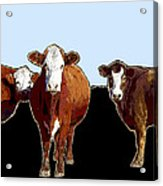 Animals Cows Three Pop Art With Blue Acrylic Print
