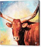 Ankole Bull Acrylic Print