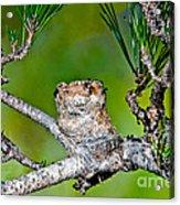 Annas Hummingbird Nest Acrylic Print
