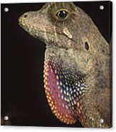 Anolis Lizard Portrait Peru Acrylic Print