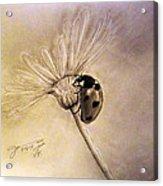 Another Ladybug Acrylic Print