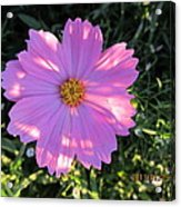 Another New And Bigger Pink Acrylic Print