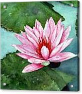 Another Water Lily Acrylic Print