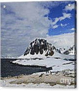 Antarctic Wilderness... Acrylic Print