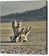 Antelope Island Stump Acrylic Print