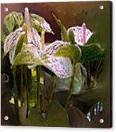 Anthutium Acrylic Print