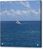 Antigua - In Flight Acrylic Print