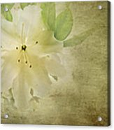 Antique Azalea Acrylic Print