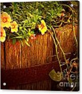 Antique Bucket With Yellow Flowers Acrylic Print