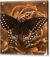 Antique Butterfly Acrylic Print by Diane Reed
