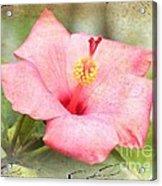 Antique Hibiscus Acrylic Print