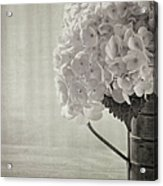 Antique Hydrangea Acrylic Print