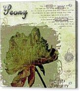 Antique Peony Acrylic Print