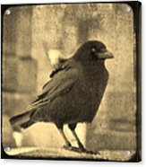 Antique Sepia Crow Acrylic Print