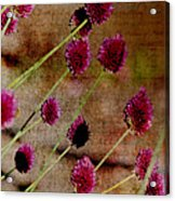 Antique Style Pink Floral Acrylic Print