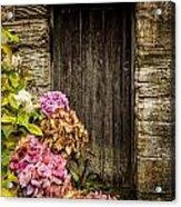 Antique Wooden Door And Hortensia Acrylic Print