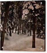 Antique Woodscape Acrylic Print