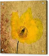 Antique Yellow Flower Acrylic Print