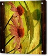Antiqued Cone Flowers Acrylic Print