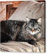 Antiquity Kitty Acrylic Print