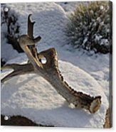 Antler Acrylic Print by Heather L Wright