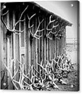 Antlers Acrylic Print