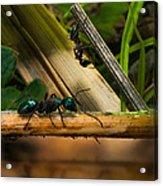 Ants Adventure 2 Acrylic Print
